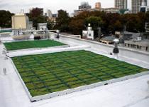 施工事例 平屋根 商用施設A 屋上緑化