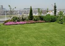 施工事例 平屋根 商用施設B 屋上緑化