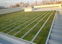 施工事例 折板屋根 商用施設C 屋上緑化