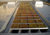 施工事例 折板屋根 商用施設E 屋上緑化