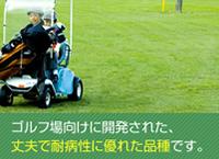 ちばフェアグリーンは、ゴルフ場向けに開発された、丈夫で耐病性に優れた品種です