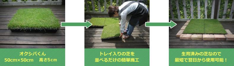 オクシバくんはトレイの芝を並べるだけの簡単施工。生育済みの芝なので最短で翌日から使用可能